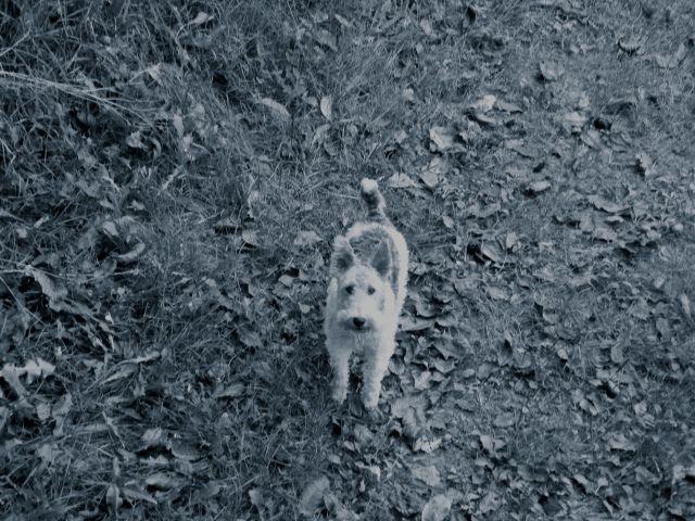 fox murder